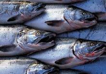 fish traceability in Ireland